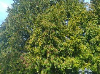 Abattage d'arbre et dessouchage | Couilly-Pont-aux-Dames