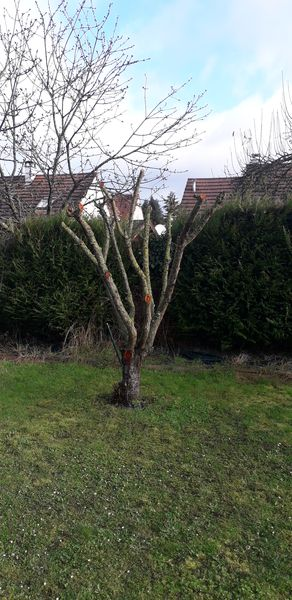 Elagage d'arbre | Magny-Le-Hongre 77