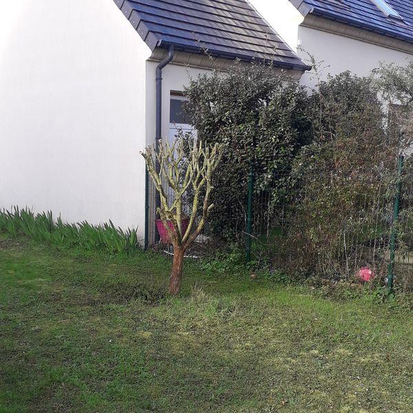 Taille d'arbuste | Ozoir-la-Ferrière 77