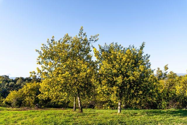 Les différents types d'arbres en France