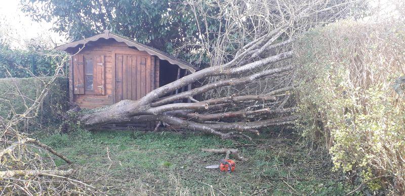 Déblaiement d'arbre après la tempête |Torcy 77