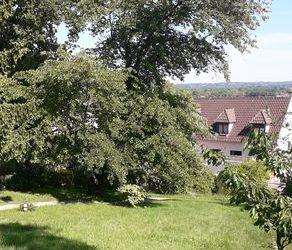 Élagage arbre de Judée | Coupvray 77