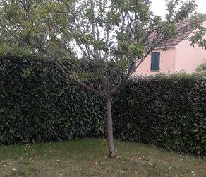 Abattage d'arbre | Gouvernes 77