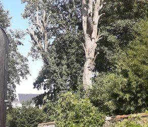 Elagage d'acacias | Meaux 77
