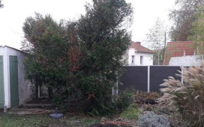 Dessouchement de Thuyas | Lagny-sur-Marne 77