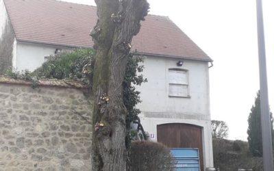 Elagage de Marronnier | Villeneuve-le-comte 77