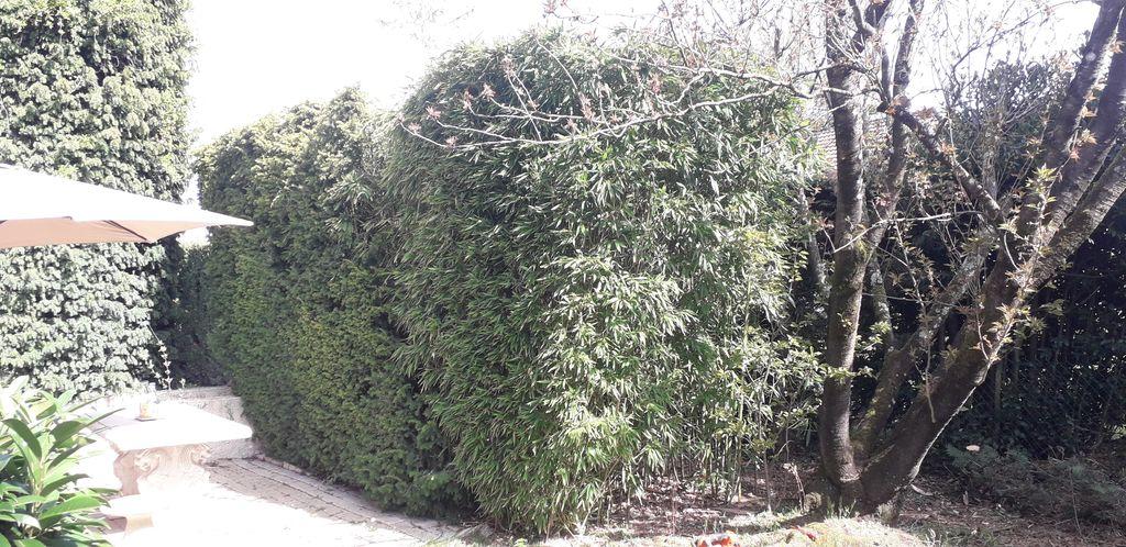 Abattage et dessouchement de Bambous