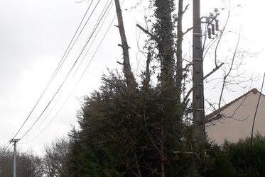 Dégagement des arbres pour ligne électrique