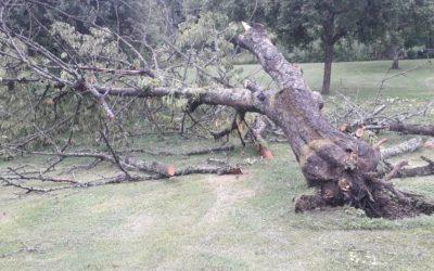 Déblaiement cerisier tombé suite à la tempête